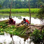 Image of farmers harvesting crops by water