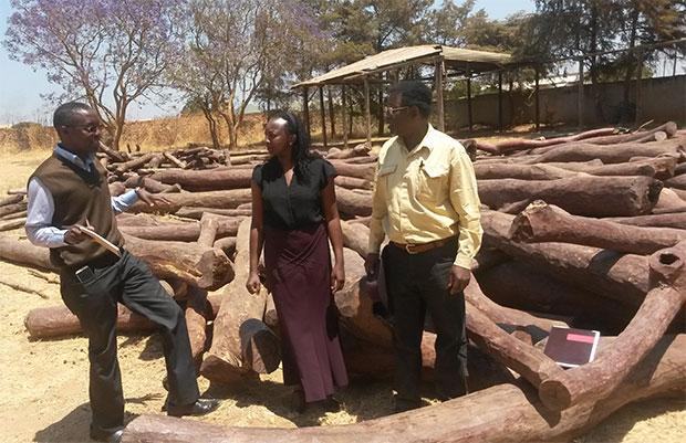 Mukula logs